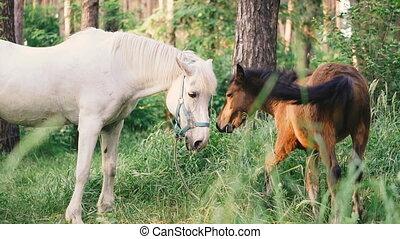 foal., cheval, promenades, poulain, forêt