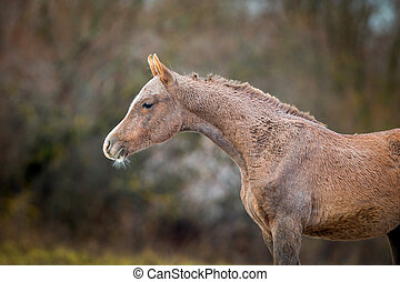 Foal in autumn