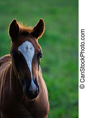 Foal in backlight - A foal in nice backlight during summer ...