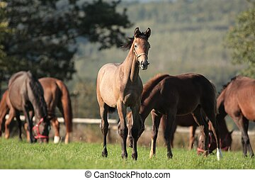 Foal in the pasture