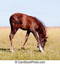 Foal on a pasture.