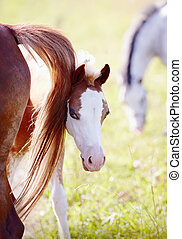 Foal on a pasture with other horses.
