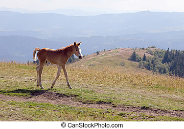 foal on the background of mountainous terrain