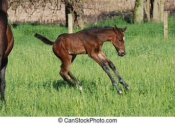 Foal playtime