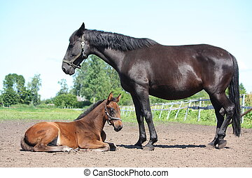 Foal resting with his mother watching over him - Brown foal ...