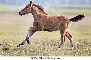 Foal running on meadow