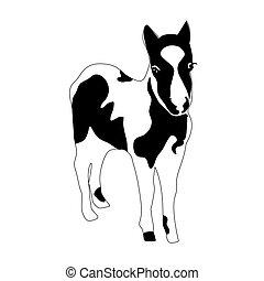 foal., silhouette, pony, schwarz, klein, schimmel