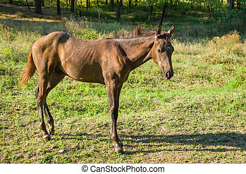 Foal standing lonely on a summer pasture