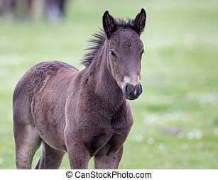 Foal standing on meadow