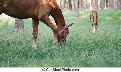 Foal. The horse walks with a foal in the forest