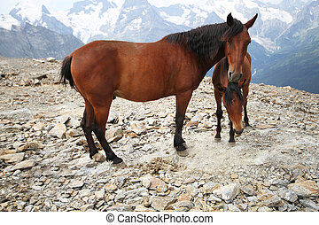 Foal with a mare in the mountains landscape