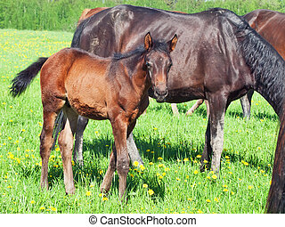 foal with mom in the pasture