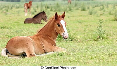foals and horses on pasture