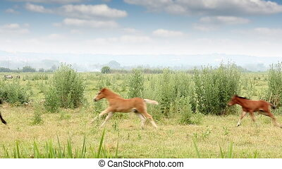 foals running on field