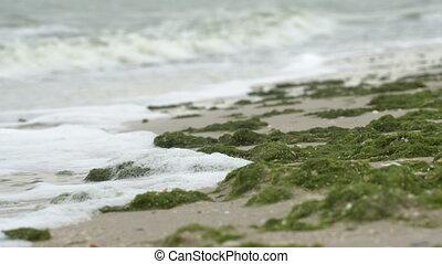 Foam waves on the seashore of the Azov Sea