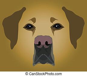 focinho, de, cão