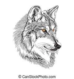 focinho, esboço, lobo