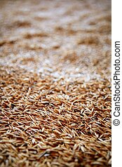 foco selectivo, textura, avena, grano, cereal