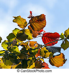 focus on bright red leaves and clear blue sky