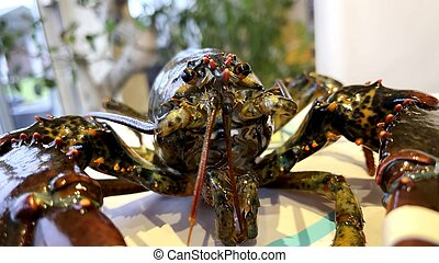 Focus on the head of a lobster
