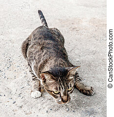 focus stray cat outdoors watching for move on food