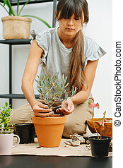 Focused busy woman in living room, replanting house plant from pot to pot.
