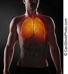 Focused on man respiratory system