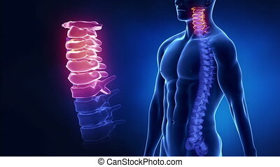 Focused on spine CERVICAL region in loop