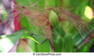 stalk and flower with hairs of green plant - focusing and...