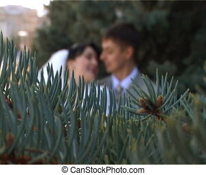 focusing from branch of firtree to kissing bride and...