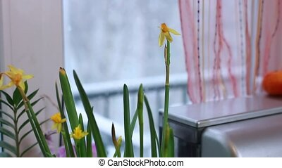 Focusing from flower to winter outside