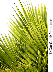 Backlit jungle palm leaves with white background