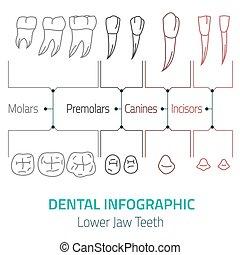 fogászati, infographic, vektor