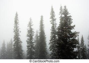 fog., árvores pinho