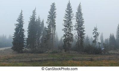 fog., τοπίο , δέντρα , ηλίθιος , φθινόπωρο