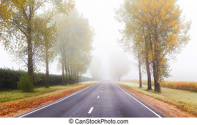 Fog above road in the morning