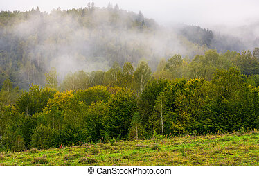 fog and low clouds over the forested mountains. mysterious...