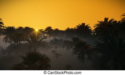 Fog and sunrise over palm tree forest, 4K