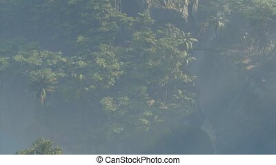 Fog covered jungle rainforest landscape