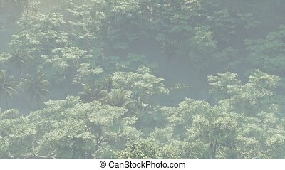 Fog covered jungle rainforest landscape