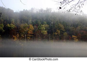 Fog & fall