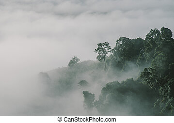 fog forest at high forest in Thailand