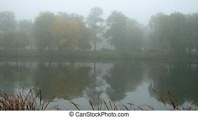 Fog forest morning lake