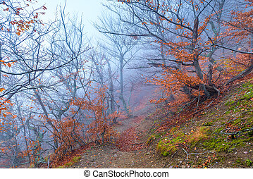 Fog high in the mountains in november, landscape