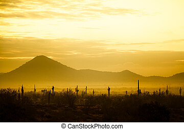 Fog hovering over the mountains of central Arizona with Saguaro cactus and other desert plants