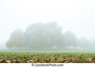 Fog in autumn park.