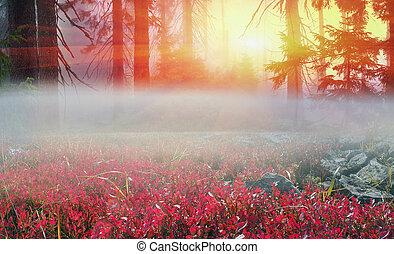 Fog in autumn wood