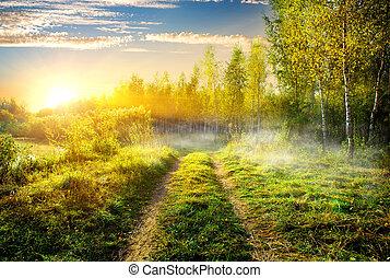 Fog in birch grove