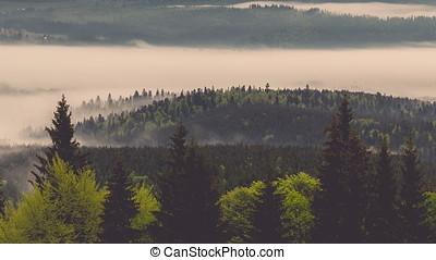 Fog in fabulous spring carpathians.