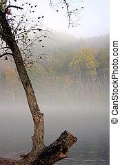 Fog in fall